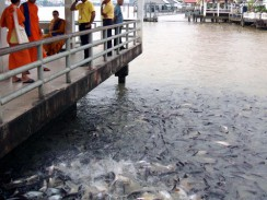 Один из каналов реки Чао-Прайя. Бангкок. Таиланд